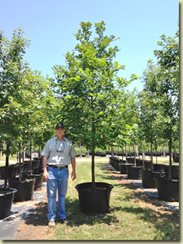how to start a tree farm in texas